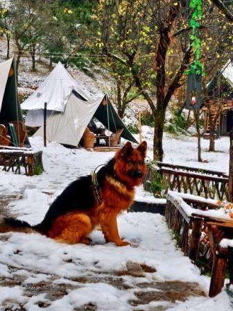 Snowfall in Bir Billing and Camping
