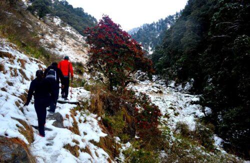 trekking experience in Bir