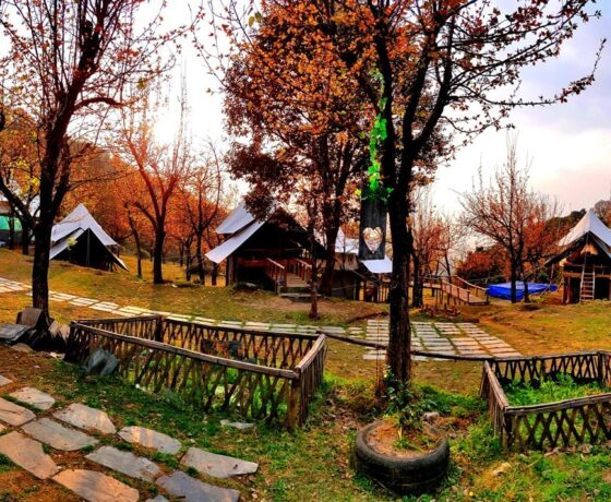 Machaan Tent Camping in Bir